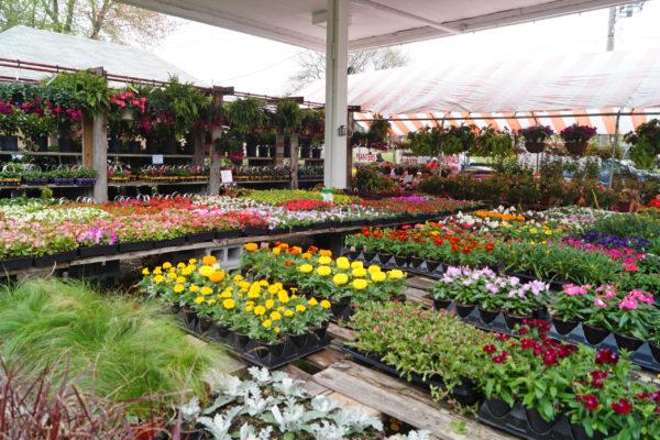Flats of flowers