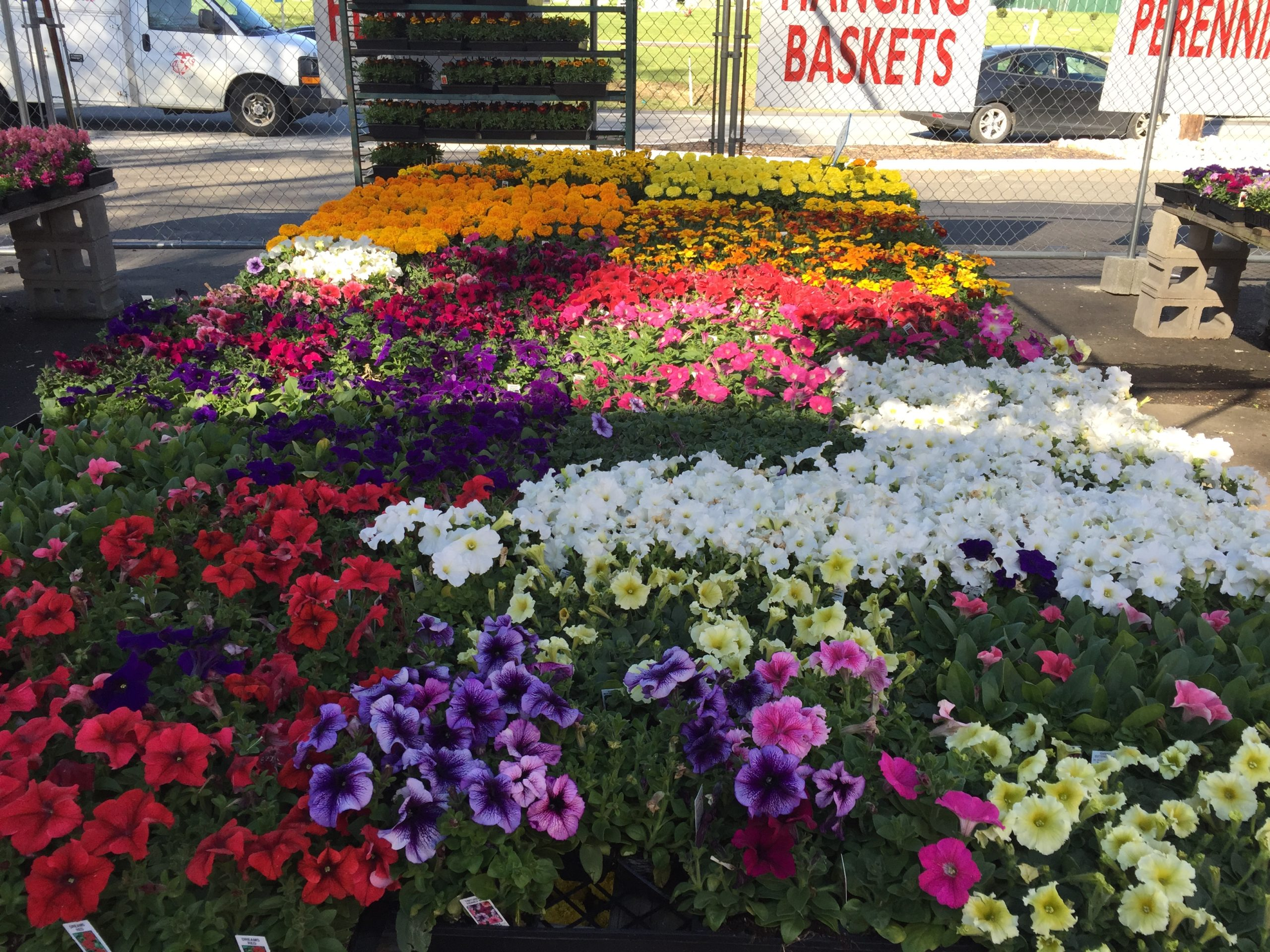 Annuals Selection